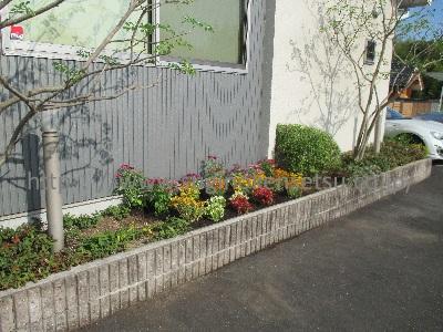 建物横花壇 下草・草花