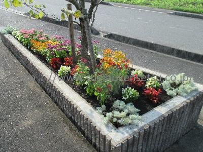 道路沿い花壇 下草・草花